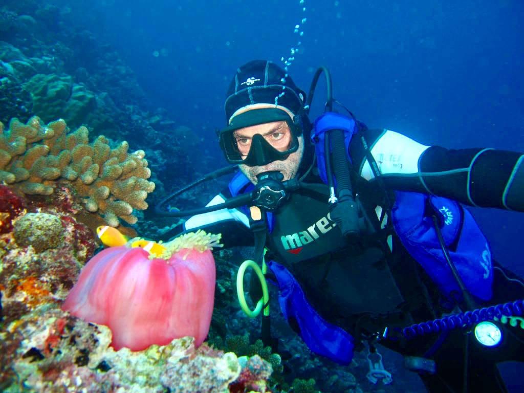 Clown Fish - Maldives